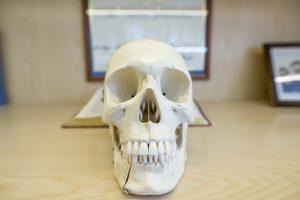 Dental-104_resize (Medium)